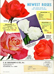 n71_w1150 (BioDivLibrary) Tags: bulbsplants catalogs equipmentandsupplies gardening nurserieshorticulture seeds trees vegetables usdepartmentofagriculturenationalagriculturallibrary bhl:page=42205956 dc:identifier=httpbiodiversitylibraryorgpage42205956 bhlgardenstories bhlinbloom taxonomy:genus=rosa taxonomy:common=rose