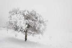 Snow-1485