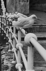 gaviotas (raquelvidalbielsa) Tags: ocean street city sea bird water animal fauna hope quiet seagull wait marsh seashore rithm