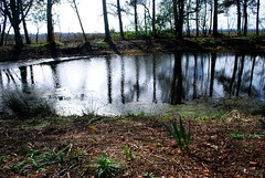 Photo of Airth Pond