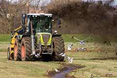 Conservation in action: Kilnhurst Ings (Billy Clapham) Tags: tractor black nature gulls sheffield reserve conservation soil management vc headed wetland rotherham trac wildlifetrust rspb claas landmanagement kilnhurstings rotaryditcher sheffieldandrotherhamwildlifetrust