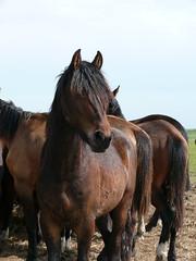Paarden Horses (ellenanka) Tags: horses horse nikon panasonic horsehead friesland fryslan paard paarden dmcfz50 noorderleech paardenhoofd