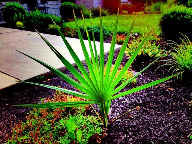 ~Happy Palm Sunday~
