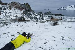 A7R-_DSC5802 (Roy Prasad) Tags: ocean travel cruise sea mountain snow reflection ice expedition water rock landscape island penguin boat ship sony antarctica chick glacier whale orca iceberg zodiac prasad halfmoon chinstrap royprasad halfmoonisalnd