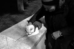 Old woman plays with kitten (Baku, Azerbaijan) (bakunin.photo) Tags: leica cats streets cat kitten streetphotography baku azerbaijan oldwoman streetphotos кошка кот m240 котенок leicam баку азербайджан пожилыелюди