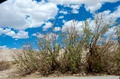Dying Trees (hecticskeptic) Tags: arizona birds spring woodpecker squirrel hummingbird desert cardinal nogales birding az deer hummingbirds morgan californiadesert maderacanyon arizonadesert southernarizona mexicanjay eleganttrogon lakepatagonia markmorgan markamorgan
