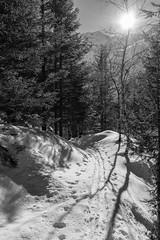 Sentiero innevato, lago di Scais (Mirco Volpi) Tags: blackandwhite mountain lake snow alberi track dam pines neve sentiero mountainlake montagna valtellina pini diga valvenina scaisdam lagodiscais digadiscais scaislake