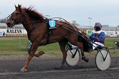 IMG_2210 (lovelymelancholy) Tags: horses horse hevoset hevonen horseraces ravit imrautio ravihevonen