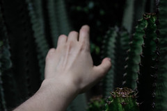 76/365 - Epine de damocls  (photografeh) Tags: cactus nature colors danger dark creativity photography idea weird hands hand autoportrait background creative manipulation unknown 365 concept conceptual biography careful foreground spiked lightroom suffer carefull damocles epine