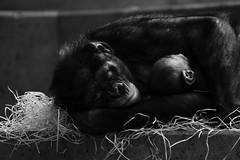 love (-j0n4s-) Tags: wild white black art nature animals canon wow monkey blackwhite flickr stuttgart wildlife tamron wilhelma 70300 2016 tamron70300 j0n4s