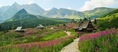 Beautiful Poland (ukasz Babula) Tags: road pink flowers summer mountain mountains green nature grass landscape outdoor path hill poland sunny august huts trail hut mountainside grassland tatry tatra