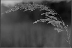 hren (Jonas Warken) Tags: plants love nature outdoor
