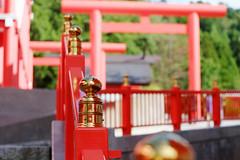 (Yorozuna / ) Tags: red color gold shrine niigata  vermilion nagaoka         inarishrine       giboshi         pentaxautotakumar55mmf18 giboushu   houtokusaninaritaisha houtokusaninarishrine