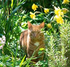 Louis (kattoms21) Tags: rot natur katze kater