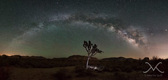 Joshua Tree Milky Way Panorama (Mike Ver Sprill - Milky Way Mike) Tags: joshuatreemilkywaypanorama pano milkywaymike michaelversprill mikeversprill mv galaxy cali california nikond800 1424 landscape nightscape nightscapers nightsky earth amazing trees mountains gorgeous star stars space cosmos lightpolution travel explore bestphotographyevery greatest trails camping camp peterlikstyle largeformatprinting 29palms hiddenvalley garyfonglightsphere strobist strobe longexposure le highiso astrometrydotnet:id=nova1606126 astrometrydotnet:status=failed