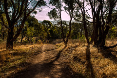 Afternoon on Mt Rogers (Andy Peyton) Tags: christmas trees sun day afternoon mt late canberra rogers