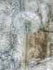 Dandelion Against my Backyard Wall (Retro Focus Eyewear & Back Thennish Vintage) Tags: photography grunge hipster dandelion indie mybackyard alternative wishing naturephotography makeawish mutedtones creativephotography amateurphotography palegrunge mutedphotography