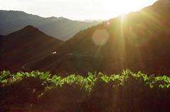 (klolam) Tags: lighting travel light shadow plants sun mountain film nature sunrise 35mm outdoors iso200 pentax kodak taiwan hike flare greenery pentaxmesuper hehuanshan colorplus kodakcolorplus