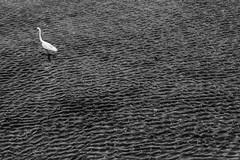 Looe, Cornwall (ezio.scotti) Tags: bw uccelli animali granbretagna anni 2016 fiumi cornovaglia