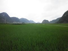 Guizhou China 2015 9 () Tags: china guizhou asia mountains