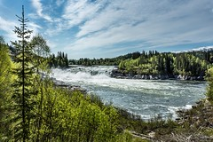 Laksforsen Grane Norway (Einar Schioth) Tags: trees summer sky cloud sun lake tree nature water norway clouds canon landscape coast norge photo waterfall day outdoor ngc picture nationalgeographic grane laksfors laksforsen einarschioth
