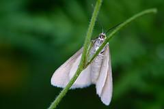 DSCF8602 (faki_) Tags: butterfly insect fuji fujifilm 24 60 rovar xe1 lepke fujinonxf60mmf24rmacro