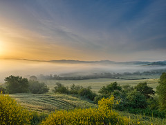 Catching the mist (Karsten Gieselmann) Tags: italien blue light sun mist color green nature weather yellow fog landscape licht spring haze nebel seasons jahreszeiten natur lawn meadow olympus it gelb grn blau toscana landschaft sonne farbe sonnenaufgang hdr wetter frhling dunst signatur m43 mft castiglionedorcia microfourthirds mzuiko feldweidewiese 1240mmf28 em5markii kgiesel