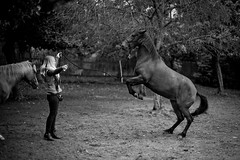 Living with Horses. (janhartmannfotografie) Tags: 095 13062016 2016 50 50mm asph animals bw black blackwhite blackandwhite deutschland documentation doku dokumentation essay franziskamichel frau germany hartmann horse jan janhartmannfotografie juni leica leicammonochrom leidenschaft liebengrn m9m mm mm1 messsucher michel mono monochrom noctilux objektiv open passion photo photostory photography prime rangefinder reportage schwarz schwarzweis symbiose tiere tierliebe weis white wide camera documentary f095 horses kamera leben lens liebe life love nocti noctiluxm pferde story woman
