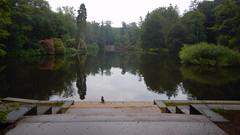 Duck at Beekhuizen Jetty (Nelis Zevensloot) Tags: beekhuizen veluwezoom velp natuurmonumenten nationaalparkdeveluwezoom veluwe petitlac teich pond bosvijver vijver