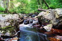 Fagnes - 27 - Into the Wild (Ld\/) Tags: wild nature water eau belgium belgique belgie ardennen ardennes venn hoge juillet malmedy hautes fagnes hautesfagnes 2016 ardenne venen eupen hohes waimes