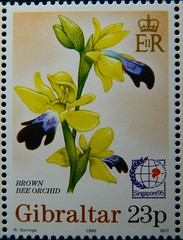 Brown bee orchid (Sylvio-Orqudeas) Tags: selos stamps orqudeas orchids orchidaceae brown bee orchid ophrys fusca