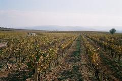 Wineyards, early morning (davidgarciadorado) Tags: fall landscape spain wine fields penedes wines olympus35sp superia200