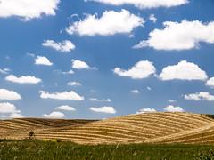 """Lomas palentinas. Serie """"En busca de campos de amapolas"""" (RosanaCalvo) Tags: espaa europa paisaje nubes lomas castillalen"""