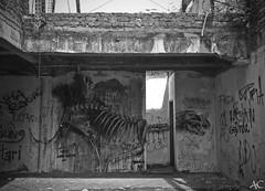 Cat skeleton (global.local) Tags: bali streetart building art abandoned nature indonesia graffiti wallart urbanart amusementpark spraypaint graff abandonedplaces naturewins wallporn graffitiporn balistreetart