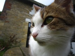 Profile. (Pagynwb) Tags: pet cats pets cute up animal animals cat mouth nose eyes kitten close sweet adorable kitty ears kittens whiskers whisker