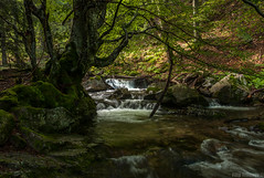 Deep in the Balkan () Tags: tree beauty creek river landscape hiking bulgaria     staraplanina   summerforest centralbalkannationalpark