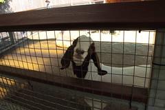 IMG_3638 (neatnessdotcom) Tags: new york city canon eos rebel zoo bronx ii di tamron vc 2016 550d f3563 t2i pzd 18270mm