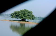 banyan tree ..witness of eras (bimboo.babul) Tags: tree scenery nature banyantree heritage