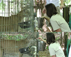April and I (Keara Clancy) Tags: animals bigcat zookeeper puma panther cougar animalsanctuary bigcats mountainlion zoolife pumaconcolor floridapanther felisconcolor flickrbigcats southfloridawildliferehabilitationcenter sfwrc southernfloridawildliferehabilitationcenter