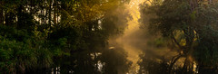 The Golden Light (Matthew Post) Tags: morning autumn winter panorama fog gold post matthew foggy australia queen
