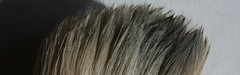 2013-05-132 (dnassler) Tags: closeup brush bristles lightandshadow hairs