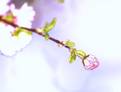 Budding Beauty (Wes Iversen) Tags: ethereal buds hmm tokina100mmf28atxprod macromondays