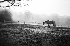a horse with no name (stocks photography.) Tags: blackandwhite stocks blackandwhitephotography tiltandshift ahorsewithnoname stocksphotography michaelmarsh tiltandshiftphotography