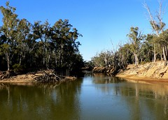 Where two rivers meet... (The Pocket Rocket) Tags: day australia victoria clear murrayriver eucalyptuscamaldulensis campasperiver riverredgums