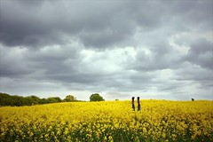 Yellow (Nada*) Tags: uk flowers 2 two england sky flower feet nature rain yellow clouds landscape fun spring funny legs joke dramatic down rape bloom ely drama wellies zwei cambridgeshire upside filed wellingtons rapeseed cambs dva rapeflower