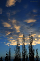 Puffy clouds (Una S) Tags: blue sunset sky white tree clouds evening twilight silhouettes puffy