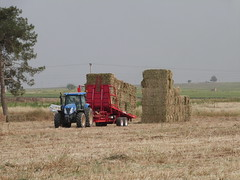 Starting a hay stack (Plegamatic) Tags: auto horse france john wagon big corn jcb trkiye straw stack trailer hay bales economic loader bale paja deere baron collector stalks bottes foin  balles ballen biomass reliable balen remorque olki balya tama selfloading makinasi hacina autochargeuse zmleri plegamatic ballenladewagen stakning stoverx strx toplamax transballesx x x  x x x