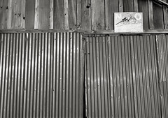 Shed, Sauvie Island (austin granger) Tags: film aluminum farm shed property land violence weathered guns suspicion largeformat trespassing sauvieisland ownership deardorff austingranger
