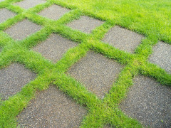 Transition (Sotosoroto) Tags: yard washington lawn bothell pavers