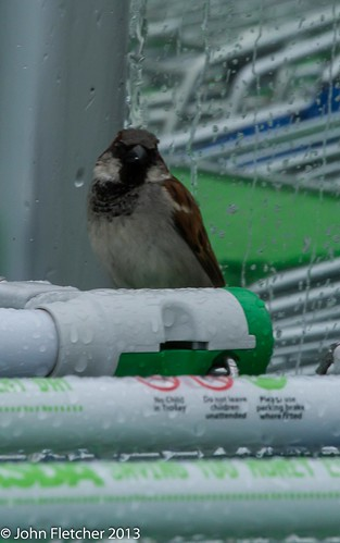Shopping sparrow